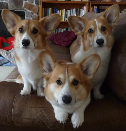 Kailyn, Darcy, Pippa