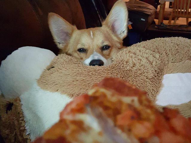 rover.com/blog/puppy-dog-eyes-quiz/