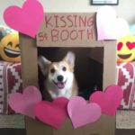 15 Corgi Kissers, A Bride And A Blue Rat