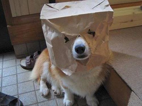 paperbagcorg