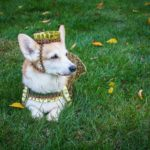 Dainty Outside, Tough Inside: Queen Lily's Story