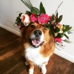 West Side Corgi: I Feel Pretty!