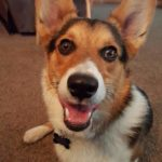 Monday Mugs: 11 Corgi Charmers To Kick Start Your Week!