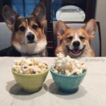11 Corgis Who Would Also Like Some of Your Popcorn, Please!