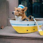 Corgis Ahoy!
