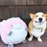 The Joy Of Corgis N' Toys!