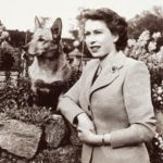 Throwback Thursday: The Royal Corgis