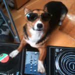 The Urban Corgi: Too Legit To Quit