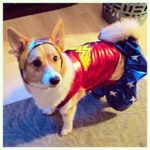 Wonder Woman: A Corgi-licious Tribute!