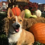 Happy First Friday of CORG-tober!