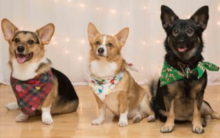 Friday Christmas Corgi-copia: 35 Bodacious Beauties!