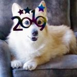 A Very Corgi New Year's Eve!